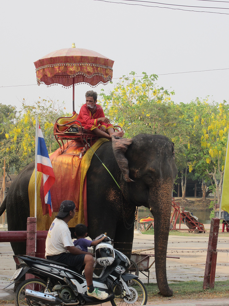 Elephant ride in Bangkok Thailand.