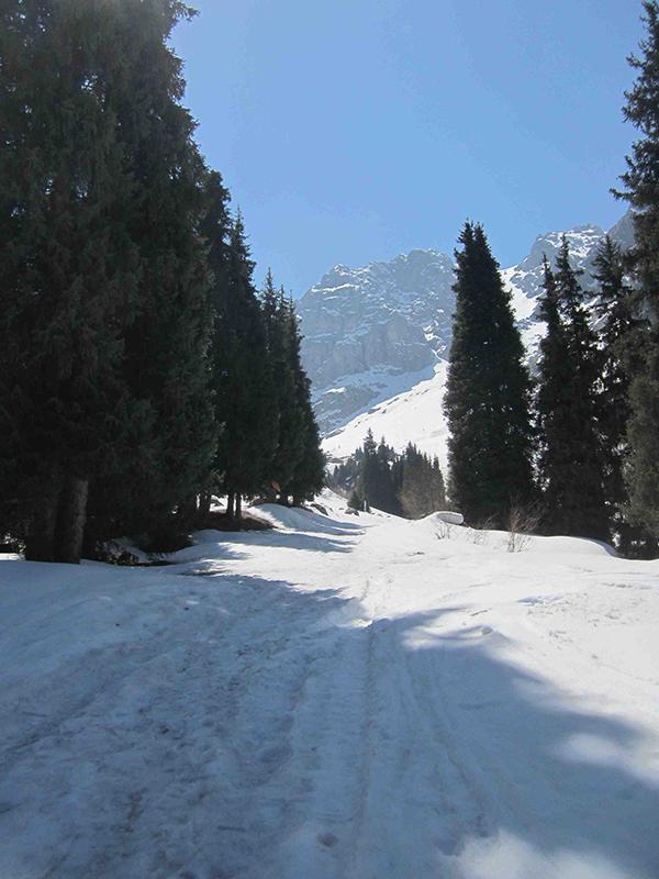 Snowy hiking trail.